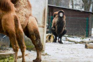 Ant zoologijos sodo konkursų krito šešėlis: stabdys 11 mln. eurų vertės pirkimus?