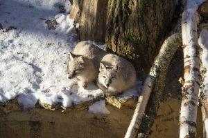 Zoologijos sode – neįtikėtinos meilės istorijos