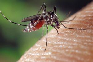 Neseniai maliarija Lietuvoje sirgo tūkstančiai