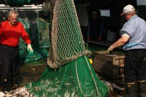 Užklydusios žuvys praskaidrina žvejų kasdienybę