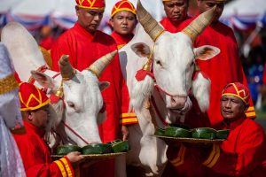 Šventieji jaučiai Tailandui pranašauja gerus laikus
