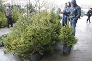 5 patarimai, kaip išvengiant rūpesčių išmesti Kalėdų eglutę ir kitus švenčių likučius