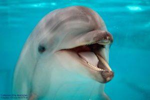Dėl delfinų – į teismą?