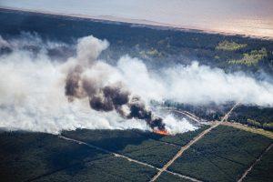 Sulaikytas miškus padeginėjęs piromanas: man tai teikia malonumą