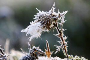 Po Naujųjų sukaustys žiema