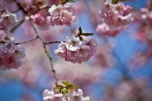 Savaitgalis – ne itin pavasariškas