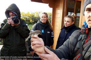 Ventės rage – paukščių rekordas