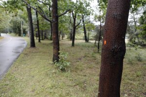 Ženklai ant medžių kėlė paniką