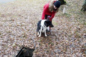 Šuo išgelbėjo lapei gyvybę