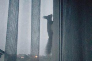"""Kas rytą – voverės """"vizitas"""""""