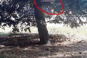 Uostamiesčio benamiai stebina išradingumu: medyje įsirengė barą