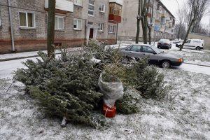 Kalėdinės eglutės – žvėrelių skanėstas