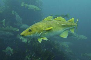 Žuvų vertė šokteli pardavimo tinkluose