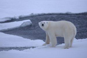 Arktyje užregistruota aukščiausia oro temperatūra per 115 metų
