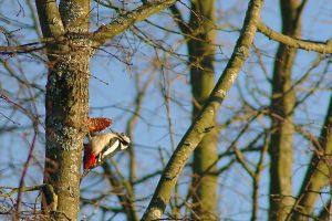 Miškui reikia ramybės – laikas į šoną padėti kirvį