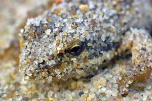 Varlės migruoja iš kartos į kartą perduodamais protėvių takais