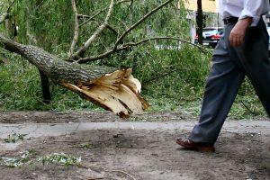 Kaune vėjas laužė medžius, išvertė tvorą ir apgadino stogą