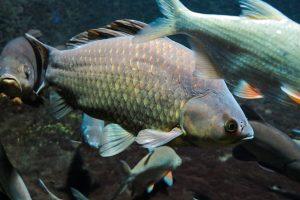 ES investicijos padės kurti gamtai draugišką akvakultūros sektorių