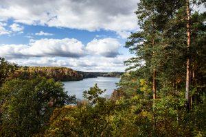 Šiemet ligos ir kitos negandos pažeidė mažesnį miškų plotą