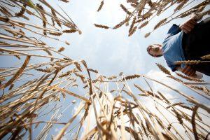 Ūkininkams Lietuva – mažų mokesčių rojus