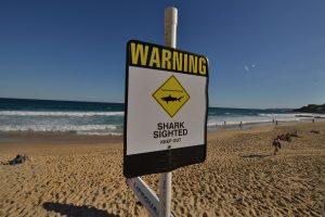Australijoje – dar viena ryklio auka