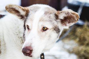 Kaip galime padėti benamiam gyvūnui?
