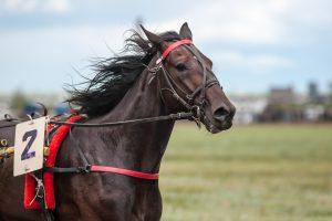 Naujovė – atspėti, kuris žirgas iškovos pergalę