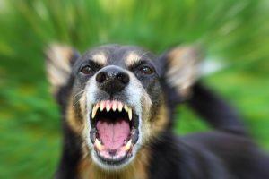 Pasieniečių šuo įkando gruzinui, bandžiusiam nelegaliai kirsti sieną