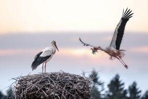 Gamtininkas: kalendorių kaitaliojimas grįžtantiems paukščiams niekada nerūpėjo