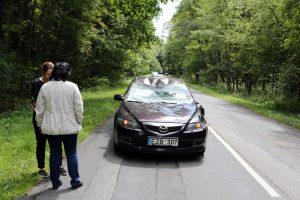 Susidūrusi su mašina žuvo briedė
