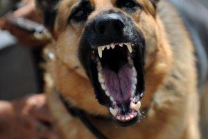 Kaune šuo įkando vaikui į veidą, prireikė operacijos