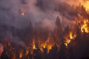 Miškų gaisrus Latvijoje sukėlė padegimai?