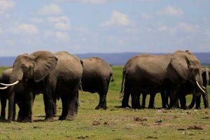 Kenijos nacionaliniame parke nušauti du brakonieriai