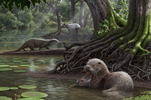 Kinijoje prieš milijonus metų gyveno vilko dydžio ūdros