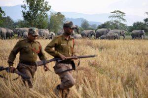 Nepale kaimą užpuolę drambliai mirtinai sutrypė žmogų, dar du sužeidė