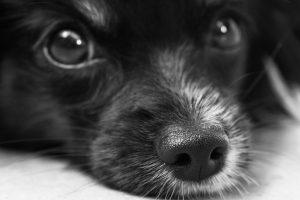 Kuršėnuose – žiauraus elgesio su gyvūnais atvejis