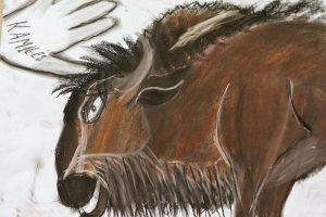 Spalvoti pasakojimai apie gyvūnus