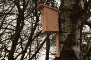 Kauno botanikos sode prieglobstį randa itin retos paukščių rūšys