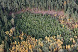 Veiklą pradeda Valstybinių miškų urėdija