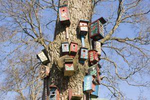 S. Paltanavičius: išgirdę piktą paukščių šurmulį iškelkite daugiau inkilų