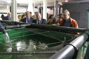 Kauno rajone užauginama šimtai tonų žuvies