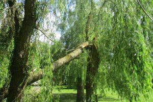 Miške Panevėžio rajone žuvo medkirtys, kitas sužeistas