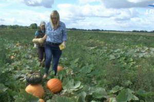 Neigia stereotipus: jauna ekonomistė grįžo į kaimą ir ūkininkauja