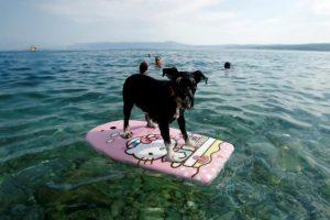 Pasaulio įdomybės: šunų paplūdimyje keturkojai gali išsimaudyti ir atsigaivinti alumi