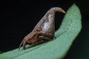 """Indijos mokslininkai naują vorų rūšį pavadino """"Hario Poterio"""" personažo vardu"""