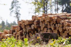 Medienos rinkoje – neregėtas kainų nuosmukis