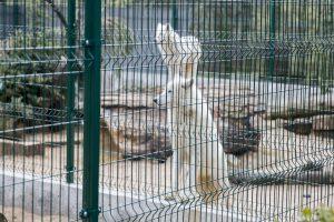 Zoologijos sodo sezono atidarymas: nauji namai vilkams ir burbulų fiesta