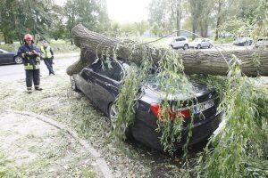 Įspėja: dėl stipraus vėjo keliuose gali būti nuvirtusių medžių
