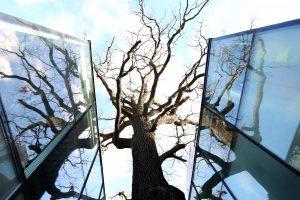 Nuotraukose – architektūriniai Lietuvos stebuklai