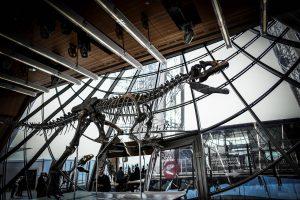 Paryžiuje parduotas itin retas dinozauro skeletas